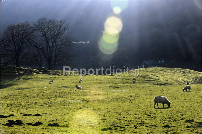 Sheep farming in Cumbria. - Christopher Thomond - 2009-03-31