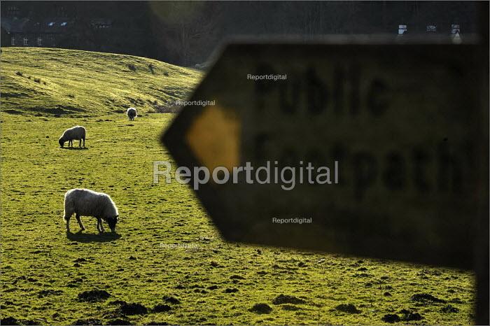 Sheep farming in Cumbria. - Christopher Thomond - 2009-03-31