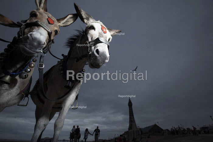 Donkeys in the gloom on Blackpool beach with the Tower. - Christopher Thomond - 2009-08-19