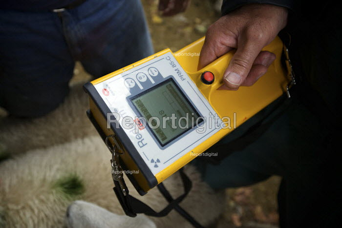 Inspectors from the Rural Payments Agency testing sheep for radiation with a Geiger counter at Baskell Farm. Lambs are still being tested 23 years after rainfall following the Chrnobyl nuclear power station accident which polluted the ground. - Christopher Thomond - 2009-09-21