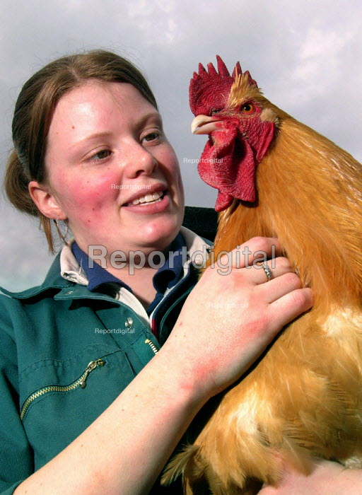 Veterinary student (and volunteer) working at a city farm in Sheffield - David Bocking - 2005-03-24