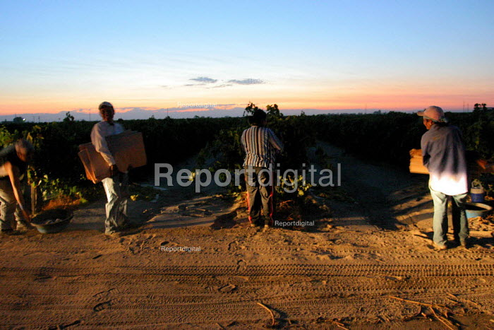 Farm workers from Oaxaca begin a day of work picking grapes for raisins near the town of Raisin City, outside of Fresno. California USA - David Bacon - 2006-09-06
