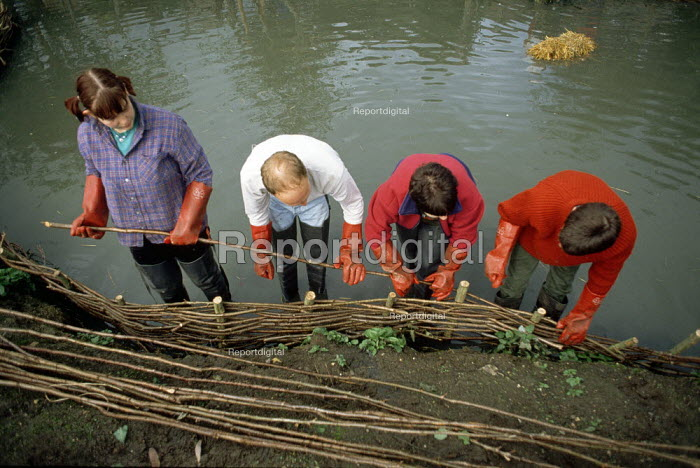 British Trust for Conservation Volunteers repairing the broken down banks of an old farm pond by using lenghts of willow sticks to weave a natural bank, during a weekend break near Princes Risborough, Oxfordshire - David Mansell - 2000-02-10