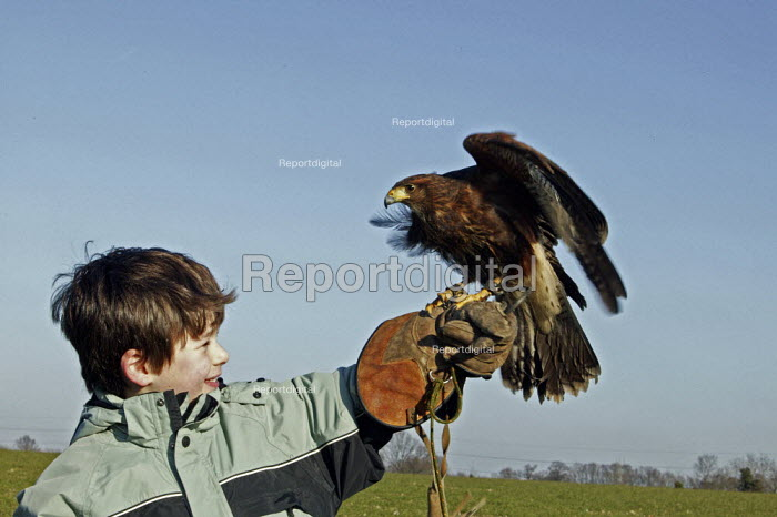 Joe Flanagan 7 year old, is holding a harris hawk, during his one day falconry course, at Impact Falconry, Blackbirds Farm Aldenham, Hertfordshire. - David Mansell - 2008-02-16