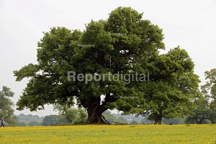 The National Trust Hatfield Forest is under threat from the expansion of Stansted Airport. Hatfield Forest is an ancient woodland, a rare surviving example of a royal hunting forest, with real historical and ecological environmental importance. - David Mansell - 2007-05-24