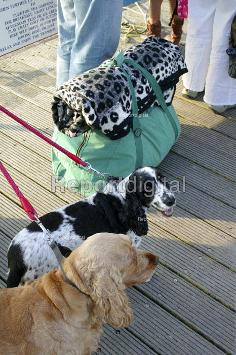 Holidaymakers stand with their bags and dogs waiting for a ferry in Christchurch Harbour, a rolled up blanket of printed black and white spots looks very similar to the black and white spaniel dog standing next to it. - David Mansell - 2009-05-10