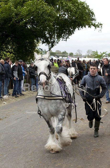 Appleby Horse Fair, Cumbria, dealers showing horses along Flashing Lane by trotting them at high speed to attract buyers - David Mansell - 2015-06-06