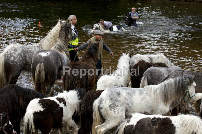 Appleby Horse Fair, Cumbria, RSPCA inspector watching horse washing in the River Eden - David Mansell - 2015-06-07