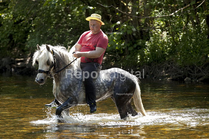 Appleby Horse Fair, Cumbria, Brian Metcalfe who has a long family history of owning and breeding horses, washing and relaxing his horses in the South Tyne River after the gruelling journey over Hartside Summit, Alston - David Mansell - 2015-06-10