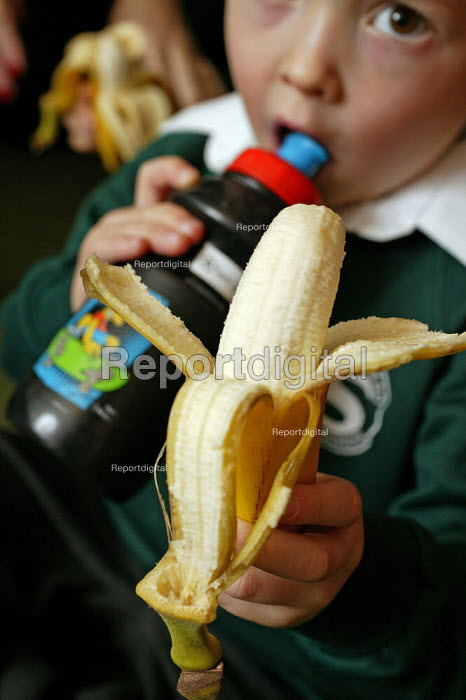 Four and five year old nursery pre school children who attend the Springfield Primary School, Welwyn Garden City, Hertfordshire, learn and practise decision making when having to decide on what fruits they would like to eat or what type of drink they would like to drink during their break time. This helps to develop the child's personal assertiveness and self confidence within small social groups. Photograph shows a child eating his banana and drinking his own drink from home. - David Mansell - 2005-12-08