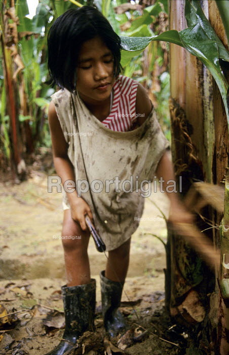 A child cuts fronds from the trunks of banana trees in the Soyapa Farms banana plantation in San Jose Campostela, Mindanao, in the Philippines. The families on the plantation are paid so little that children have to work to supplement family income. The plantation was created by Stanfilco, the Philippine subsidiary of Dole Corporation. - David Bacon - 2007-01-05