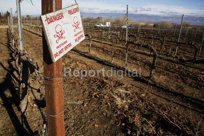 A sign warns Danger pesticide Dn Not Enter by a field of grapevines that has been sprayed with chemical pesticides that could be hazardous to control pests, Salinas Valley, California - David Bacon - 2012-01-26