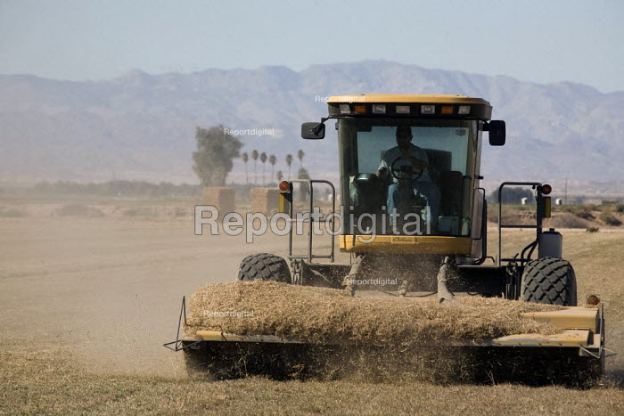 A mower cutting grass left after the harvest of a field, Seeley, Imperial Valley. California - David Bacon - 2012-02-04