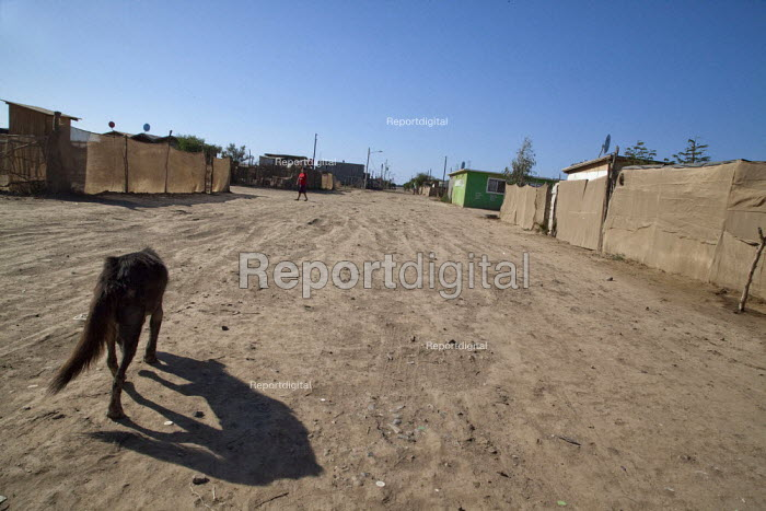 Mexico, Baja California Norte, accommodation at Rancho Los Pinos. A dog walking down the dirt road. The workers in Los Pinos are almost all indigenous Mixtec and Triqui migrants from Oaxaca, in southern Mexico. - David Bacon - 2015-06-05