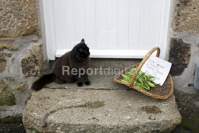 Home grown vegetables for sale from the garden, runner beans and a cat on the doorstep of a cottage, Cornwall. - Duncan Phillips - 2011-08-17