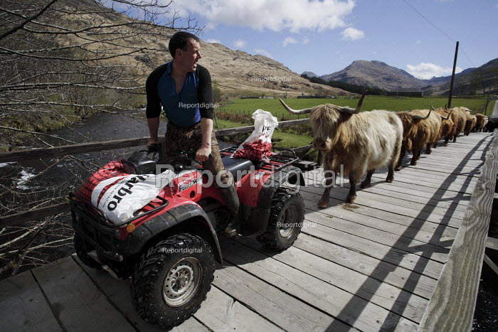 Drew Harris is one of the long-time residents of the Knoydart Peninsula in North-West Scotland. He is the estate manager at Kilchoan which owns this herd of Highland cattle. Quad bikes are coomonly used on Highland estates. - Gerry McCann - 2006-05-03