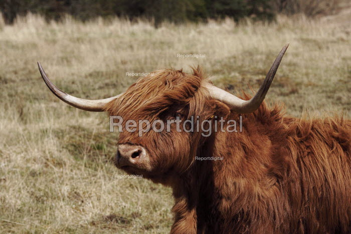 The Knoydart Peninsula in North-West Scotland comprises a number of estates. This is at Kilchoan which owns this herd of Highland cattle. - Gerry McCann - 2006-05-03