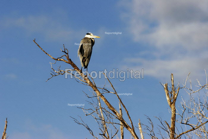 A heron at iSimangaliso Wetland Park, on South Africas east coast (also called Elephant coast). - Gerry McCann - 2005-04-30