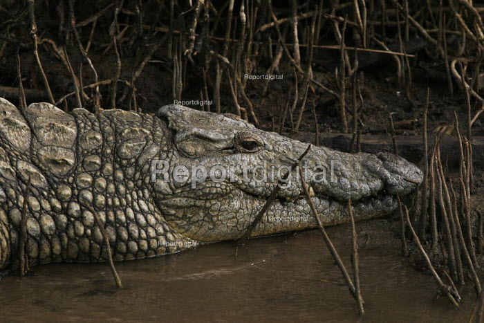 A crocodile at iSimangaliso Wetland Park, on South Africas east coast (also called Elephant coast). - Gerry McCann - 2005-04-30