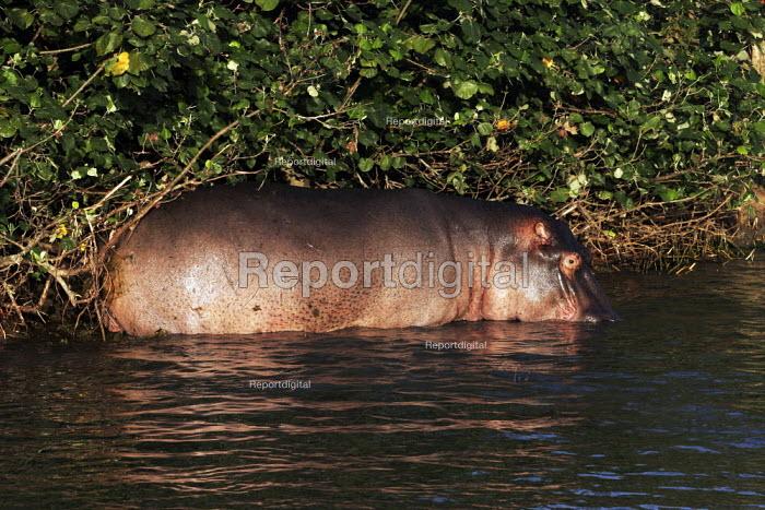A hippopotamus at iSimangaliso Wetland Park, on South Africas east coast (also called Elephant coast). - Gerry McCann - 2005-04-30