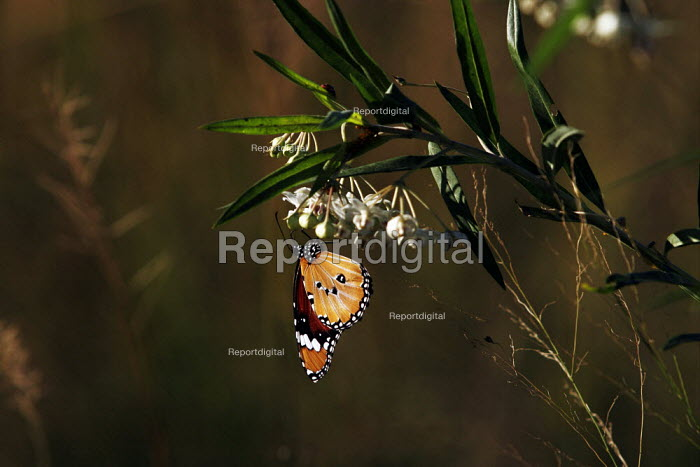 A butterfly at iSimangaliso Wetland Park, on South Africas east coast (also called Elephant coast). - Gerry McCann - 2005-05-01