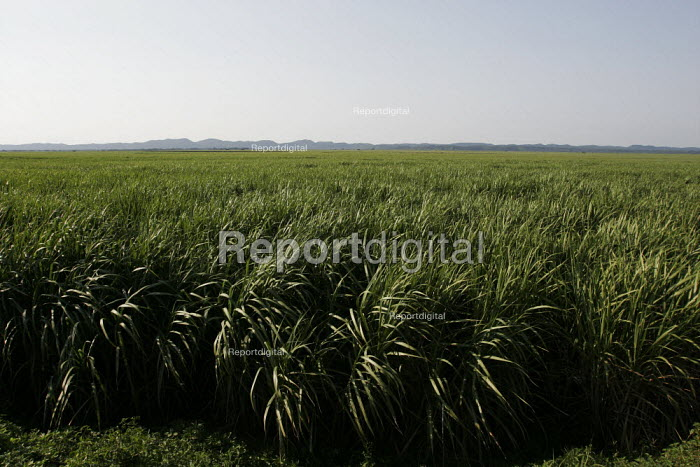 A Sugarcane farm which employs mainly migrant workers, at St.Lucia, on South Africa's east coast. - Gerry McCann - 2005-05-04
