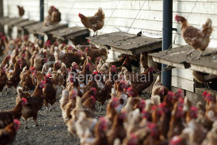 Free range chicken farm, Warwickshire. - John Harris - 2005-12-12