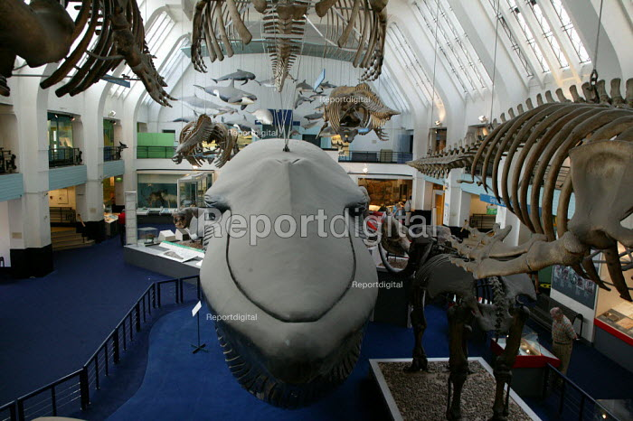 The Natural History Museum, London. The Life gallery, life sized exhibits of mammals - John Harris - 2005-08-29