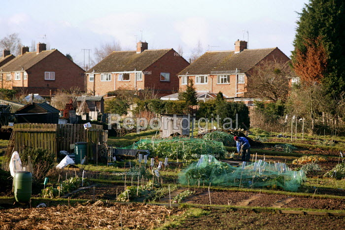 Retired man digging a vegetable patch on his allotment. - John Harris - 2006-01-18