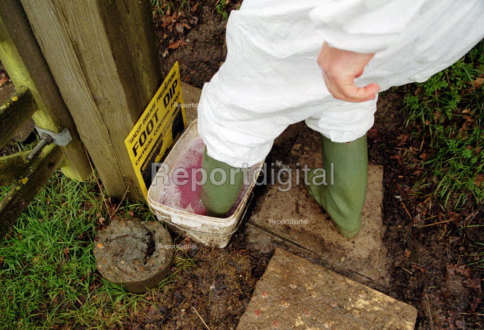 Maff Vet using a foot dip at the farm gate to disinfect wellington boots, visiting a farm to carry out an inspection, checking for symptoms of foot and mouth disease in an at risk area. - John Harris - 2001-03-28