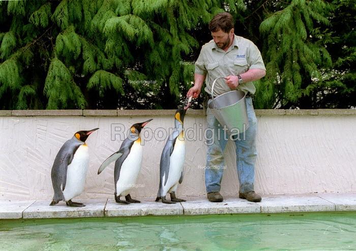 Keeper feeding fish to King Penguins, Penguin enclosure Bourton on the Water Bird Gardens. - John Harris - 2002-03-11