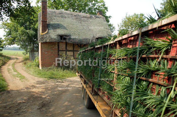 Spring Onions being transported down a country lane by tractor and trailer. - John Harris - 2003-08-07