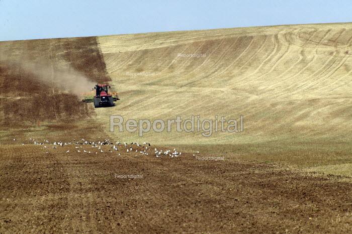 Large scale cultivation on a farm in Warwickshire. - John Harris - 2003-08-16