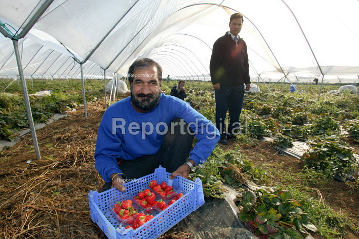 Irag Kurds picking on a strawberry farm in the Vale of Evesham. Fusion Personel are working with The Ethical Trading Initiative to set up a licensing and registration scheme for Gangmasters to try and regulate the use of temporary workers, their pay and conditions. - John Harris - 2003-10-17