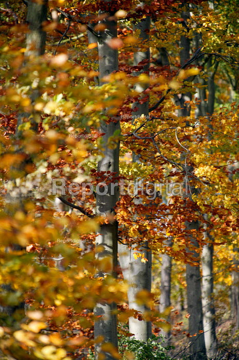 Autumnal colors of trees, Warwickshire. - John Harris - 2003-11-03