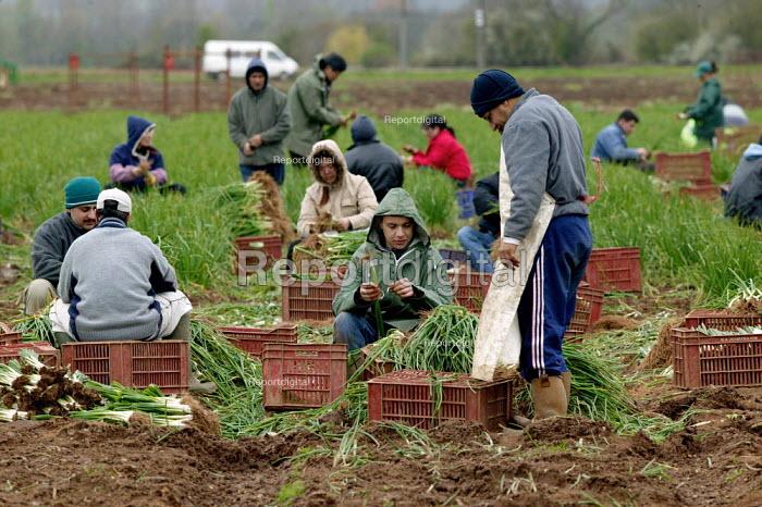 Gangmasters overseeing seasonal workers picking onions on a farm in Warwickshire. - John Harris - 2004-04-05