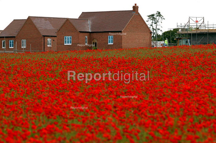 A field of poppies as new houses are constructed on a greenfield site on the edge of town. Stratford on Avon. - John Harris - 2004-06-28