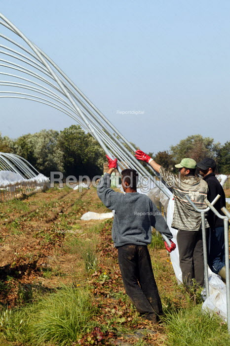 Migrant farm workers taking down polytunnels used to grow strawberries, Fusion Personnel, Bretforton, Vale of Evesham - John Harris - 2004-09-09