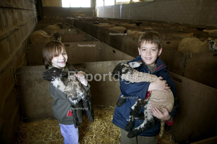 Boys in the lambing shed, holding lambs, farm visit, Worcestershire - John Harris - 2006-06-03