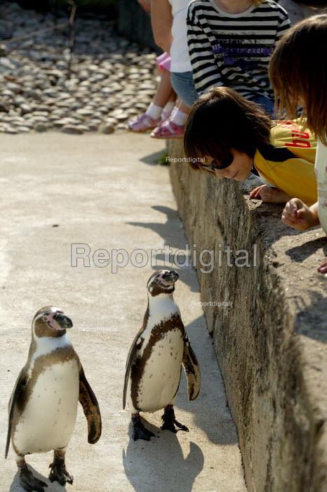 Boys visiting the zoo, penguin enclosure, Cotswold Wildlife Park - John Harris - 2007-05-31