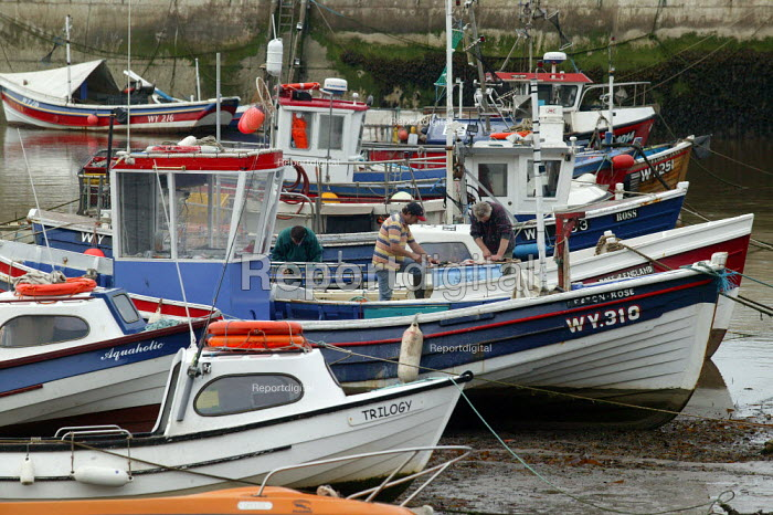 Fishermen filleting fish onboard their boat in the harbour, Staithes, North Yorkshire. - John Harris - 2007-07-21