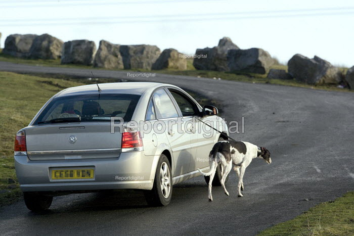 An elderly man walking his dog from his car along a road in the hills above Merthyr Tydfil - John Harris - 2008-12-10