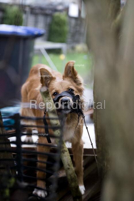 Noisy barking dog with a muzzle in a garden. - John Harris - 2009-01-28