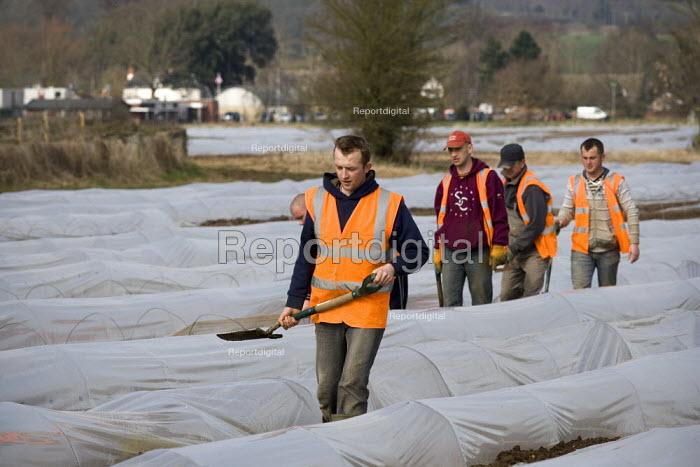 Migrant workers repairing asparagus polytunnels on a farm in Warwickshire - John Harris - 2009-03-11