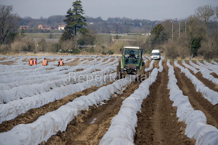 Migrant workers repairing asparagus polytunnels on a farm in Warwickshire - John Harris - 2009-03-11