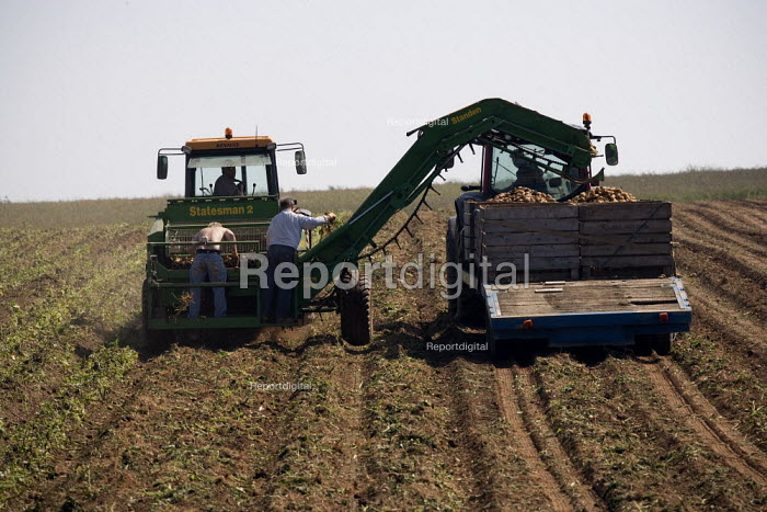 Farmworker sorting on the back of a potato harvester, Warwickshire - John Harris - 2009-07-02
