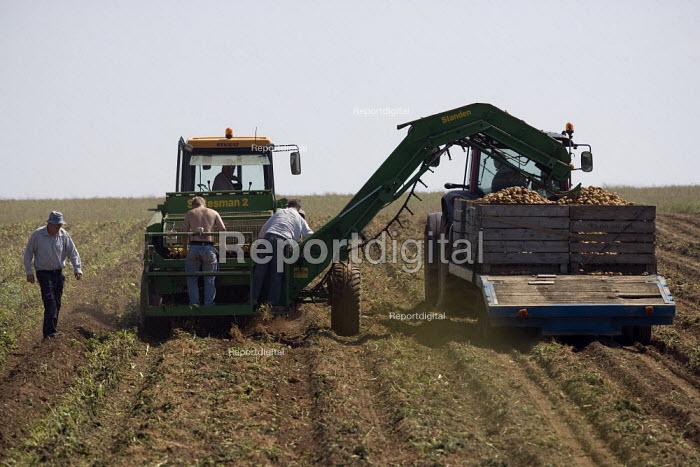 Farmworker sorting on the back of a potato harvester, Warwickshire - John Harris - 2009-07-02
