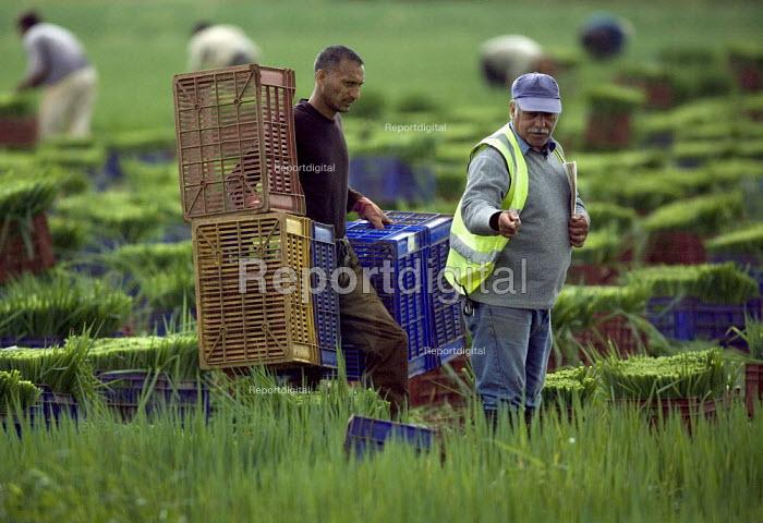 Onion pickers in a field in Warwickshire. - John Harris - 2009-07-22