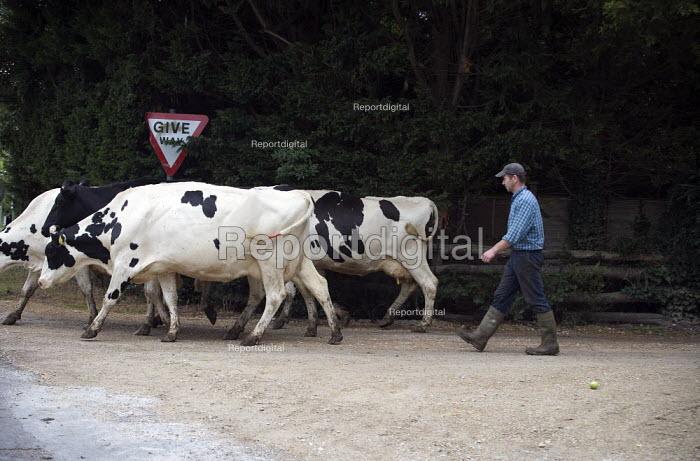 A farmworker herding cattle across a road to graze in a pasture. - John Harris - 2009-07-22