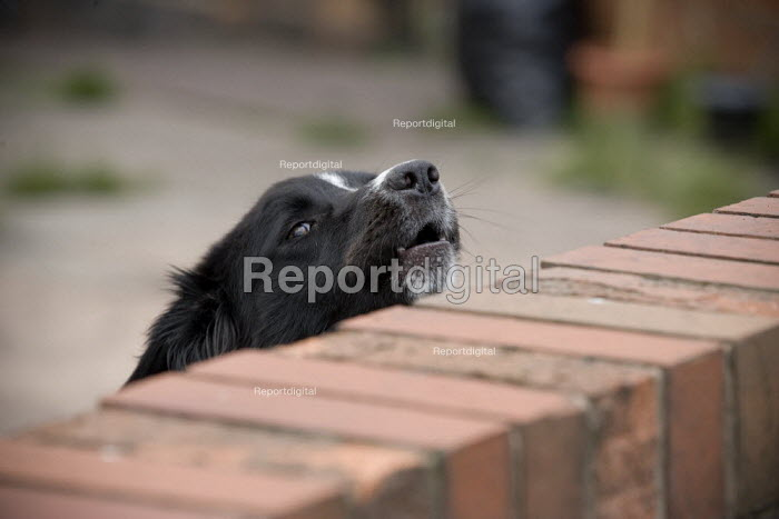 Dog barking in a back garden Wednesbury - John Harris - 2009-07-18